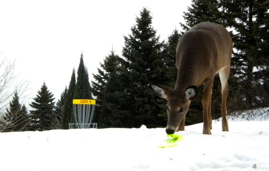 Looks like this guy was checking to see if it was his disc. (photo by Mark Doucette)